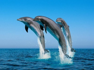 Dolphins Jumping Out of the Water.jpg