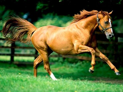 Horse Galloping in a Field.jpg